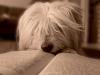 katjusa_dolensek_pasje-sanje_1