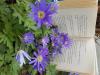 lucija_dovzan_reading-with-flowers_4